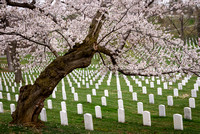 Arlington National Cemetery (2)