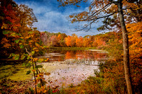 Fall Foliage and Pond - Textured