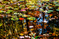 Fall Foliage - Reflections in a Lily Pond
