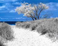 Mentor Headlands Beach - Infrared Faux Color 720nm style
