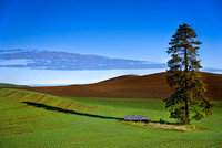 Palouse Scenic Byway Rolling Hills Cuntryside (2)