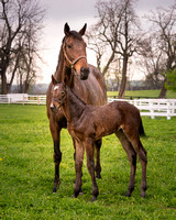 Dame and Foal
